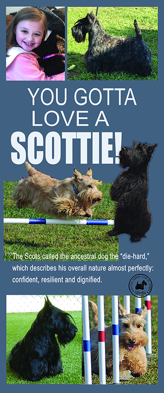 You Gotta Love A Scottie, the adorable, cuddly, agile, spirited little dogs